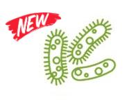 Противовирусная и антибактериальная ароматизация